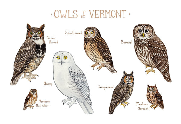 Wholesale Owls Field Guide Art Print: Vermont