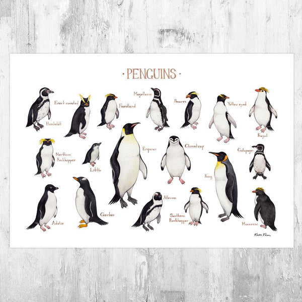 Wholesale Field Guide Art Print: Penguins of the World