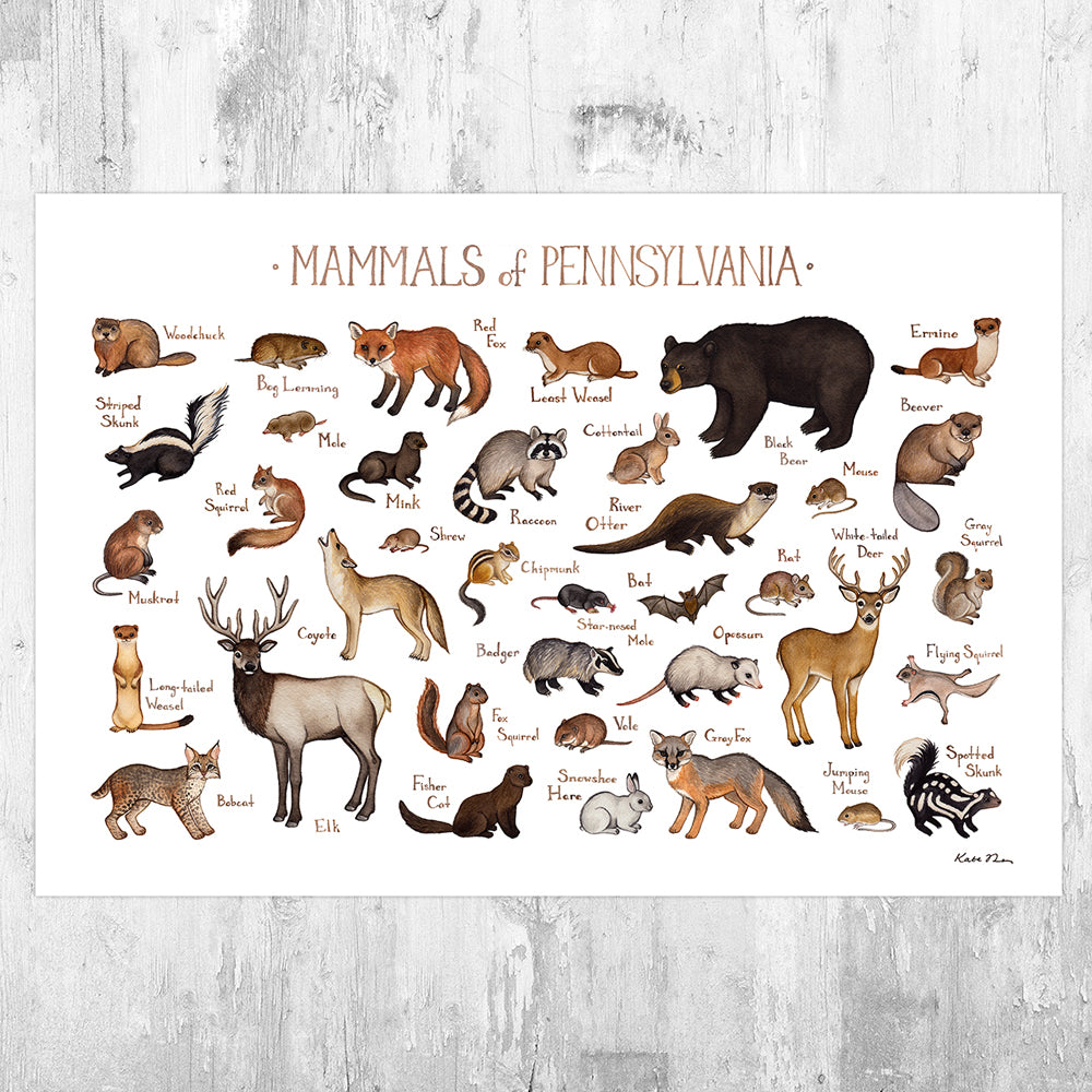 Wholesale Mammals Field Guide Art Print: Pennsylvania