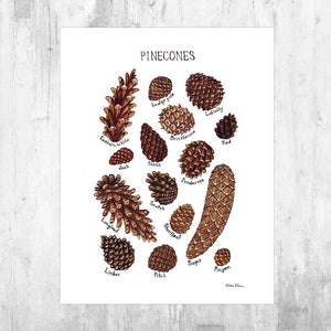 Wholesale Field Guide Art Print: Pine Cones