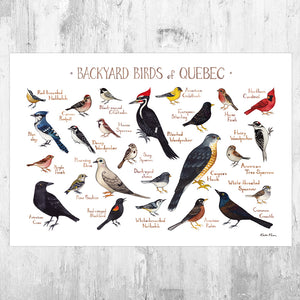 Wholesale Backyard Birds Field Guide Art Print: Quebec