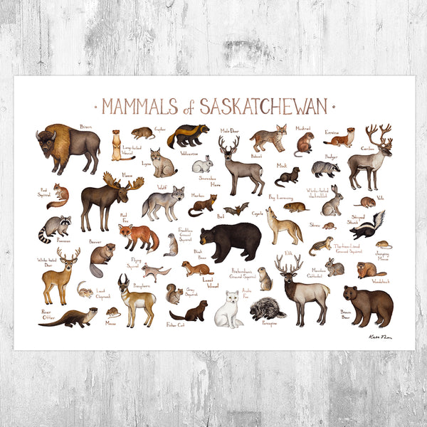 Wholesale Mammals Field Guide Art Print: Saskatchewan