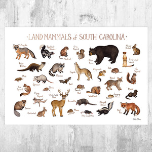 Wholesale Mammals Field Guide Art Print: South Carolina