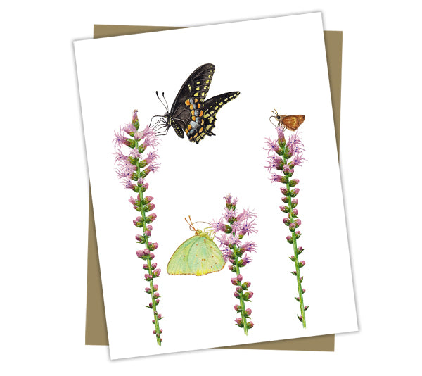 Wholesale Cards: Butterflies on Blazing Stars