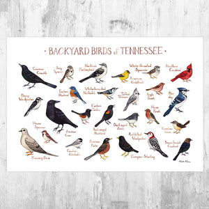 Wholesale Backyard Birds Field Guide Art Print: Tennessee