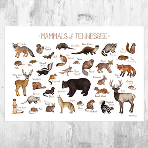 Wholesale Mammals Field Guide Art Print: Tennessee