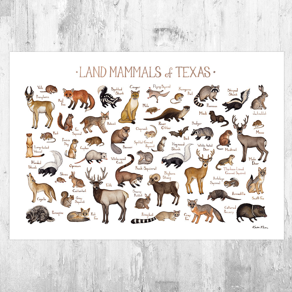 Wholesale Mammals Field Guide Art Print: Texas