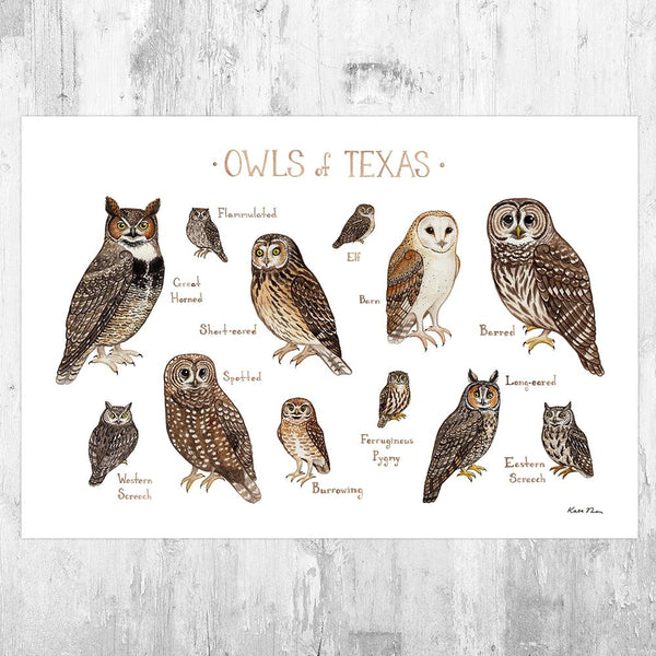 Wholesale Owls Field Guide Art Print: Texas