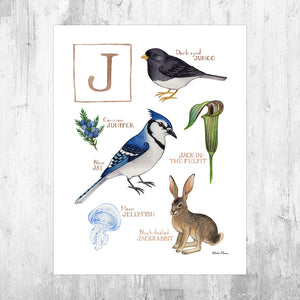 Wholesale Field Guide Art Print: The Letter J