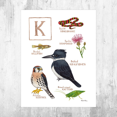 Wholesale Field Guide Art Print: The Letter K