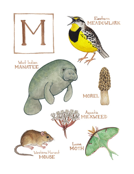 Wholesale Field Guide Art Print: The Letter M