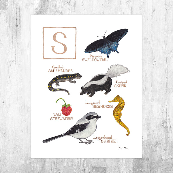 Wholesale Field Guide Art Print: The Letter S