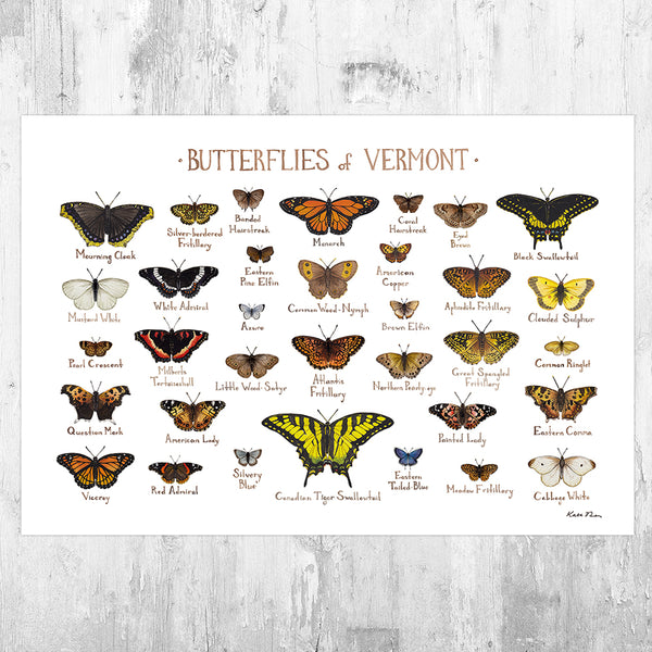 Wholesale Butterflies Field Guide Art Print: Vermont
