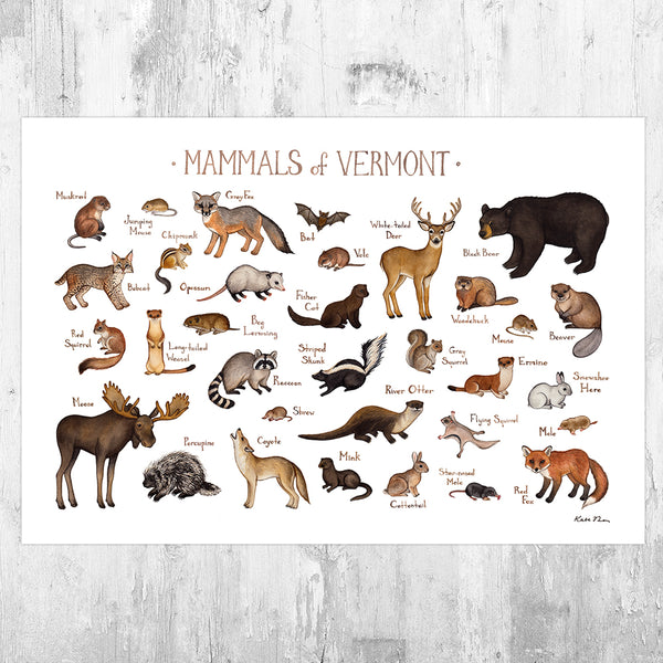 Wholesale Mammals Field Guide Art Print: Vermont