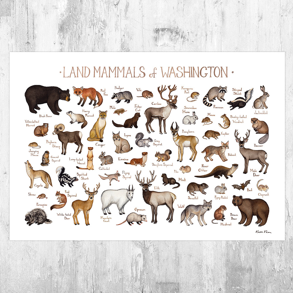 Wholesale Mammals Field Guide Art Print: Washington