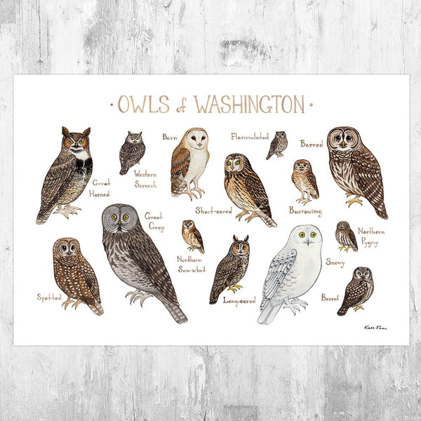 Wholesale Owls Field Guide Art Print: Washington