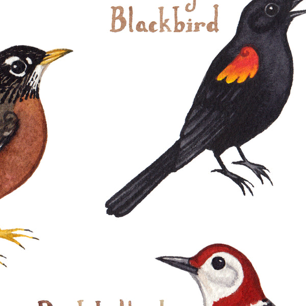 Wholesale Backyard Birds Field Guide Art Print: West Virginia