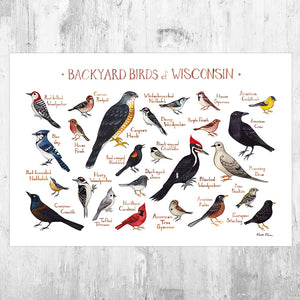 Wholesale Backyard Birds Field Guide Art Print: Wisconsin