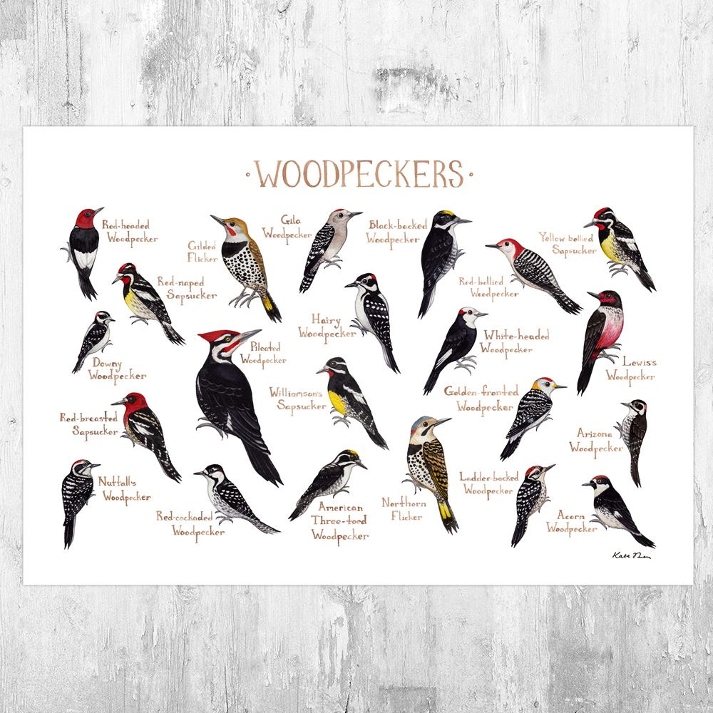 Wholesale Field Guide Art Print: Woodpeckers of North America