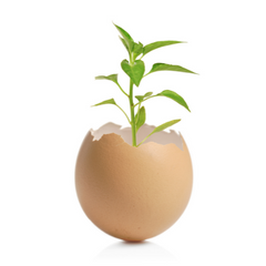 Fragile Planting Growing in Eggshell