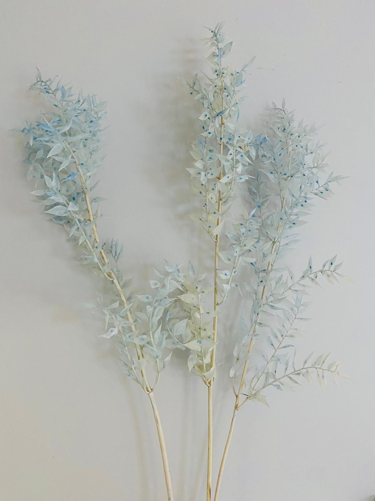Pale Blue preserved Ruscus