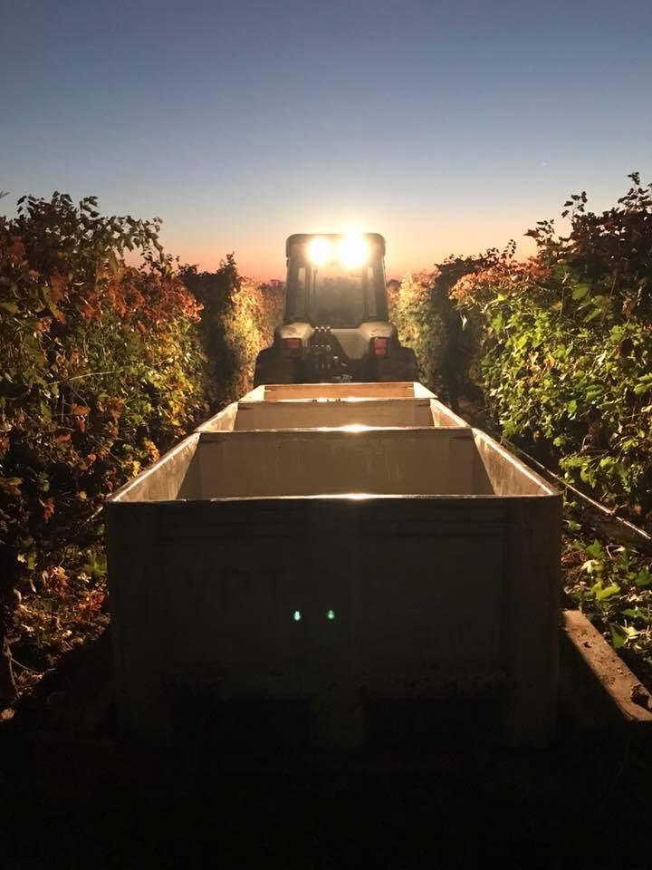 Campos Family Vineyards Harvest