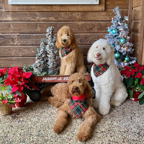 Merry Christmas from Dacus Doodles