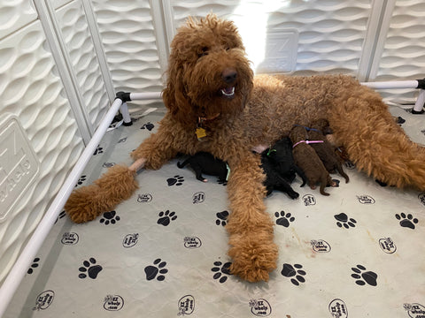 Lucy and her babies