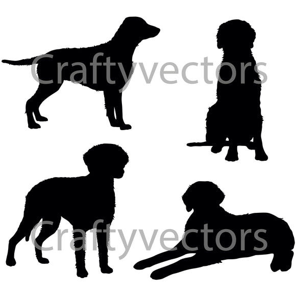 Curly Coated Retriever Dog Vector