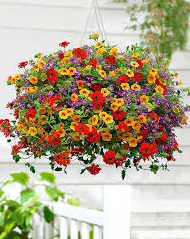 Outdoor Hanging Basket - Blooms In Bloom