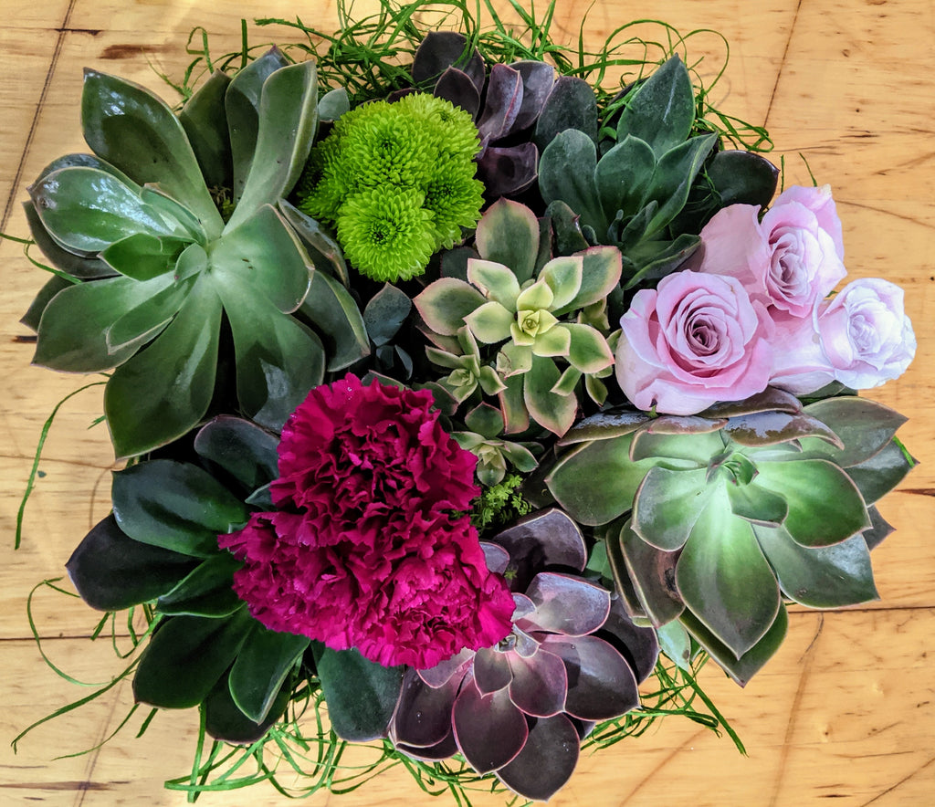 Mixture of Succulents - Blooms In Bloom