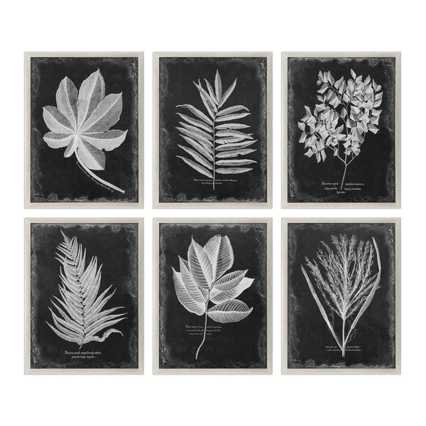 Uttermost Foliage Framed Prints, S/6 33671 - BathVault