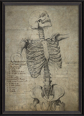 11446 BC Skeleton 29 Framed Art