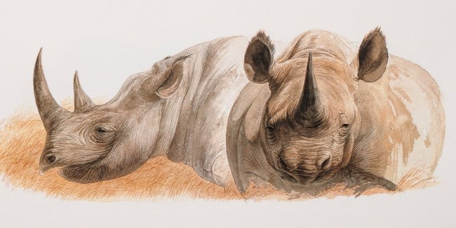 Black rhinoceros ©Keith Brockie