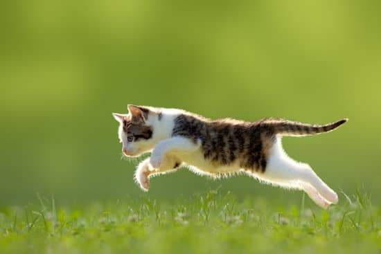 How high can cats jump? Do Cats Really Jump Higher Than Dogs?