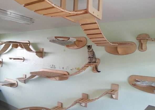 Top Idea Amazing Playgrounds for Cats