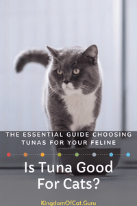 Is tuna good for cats?
