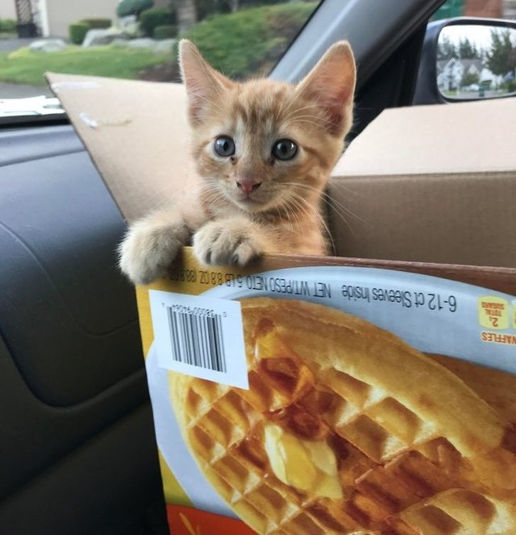 25 Photos Proving That Cats Are Genlte and Cute (With Photos)