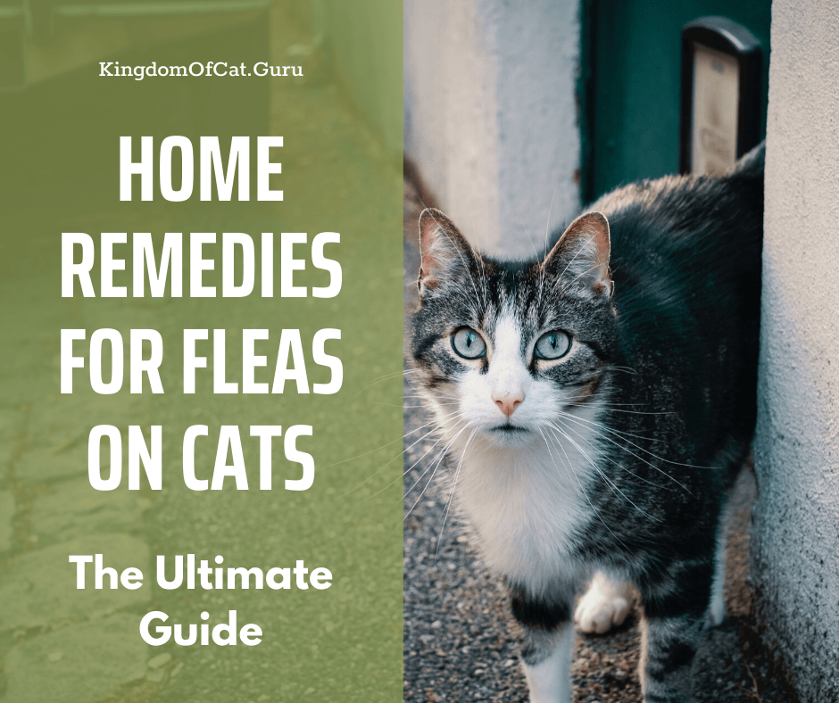 Home Remedies for Fleas on Cats (Simple and Easy)