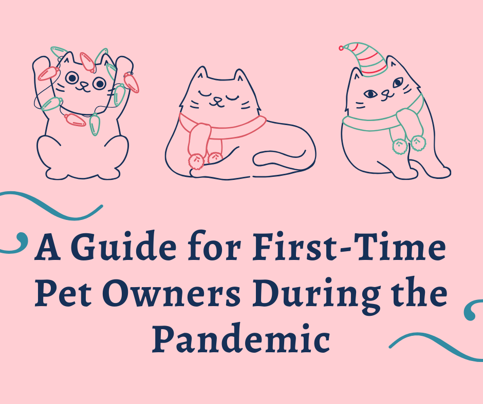 A Guide for First-Time Pet Owners During the Pandemic