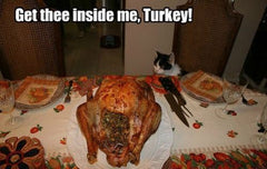 30+ Hilarious Cat Thanksgiving Memes For This Nov 2020