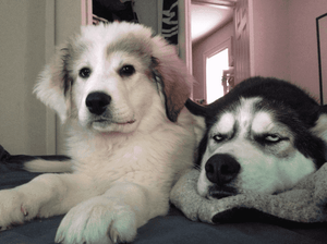 "20+ Puppies Whose Eye ""Expressions"" Would Win An Oscar"
