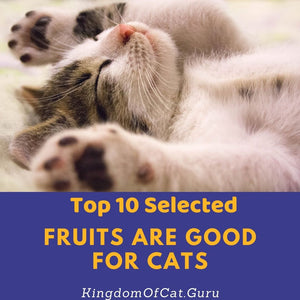 What Fruits Are Good For Cats? Can My Cat Eats That?