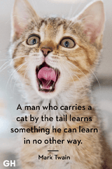 The Best Adorable Cat Quotes That Perfectly Describe Your Kitten