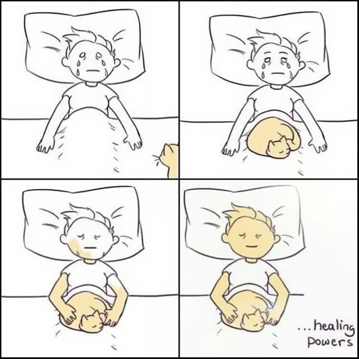 Hilarious Comics That Reveal The Reality Of Living With Cats