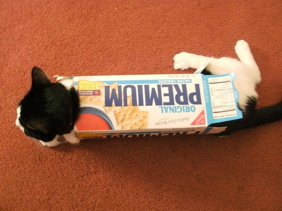 Top 20 Hilarious Cats Who Desperately Try To Fit Inside A Small Box