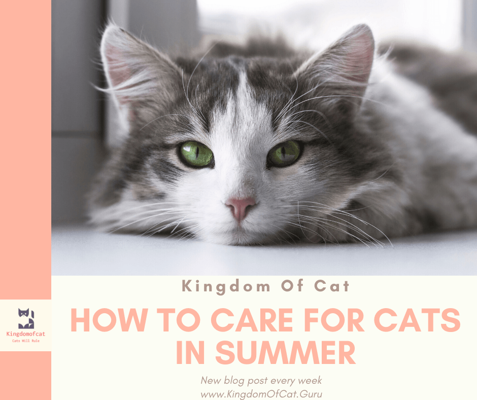 How to Care for Cats in Summer: 9 Care Tips