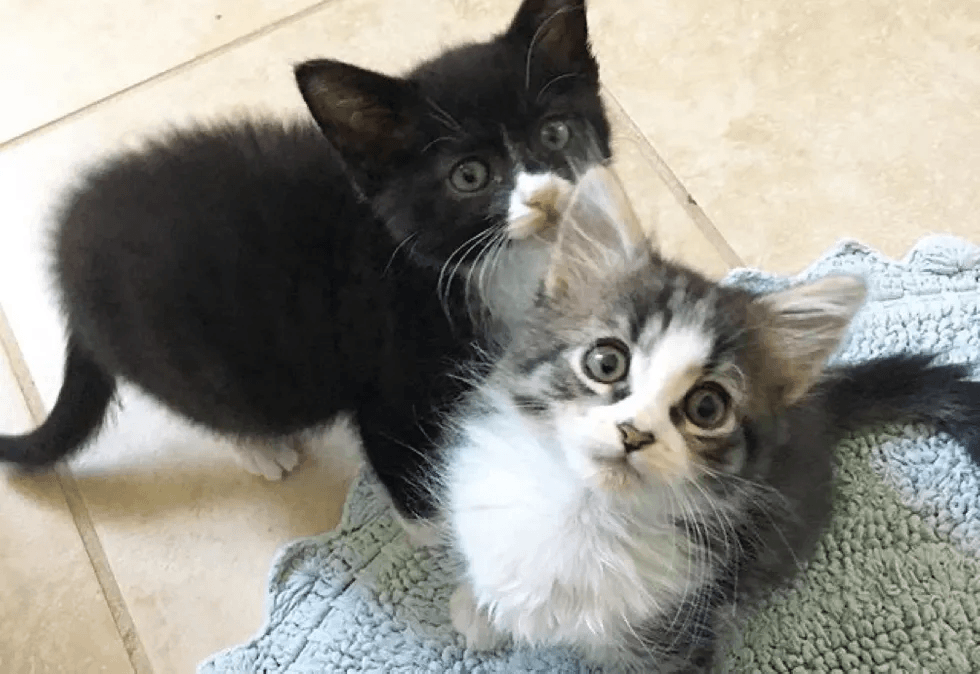 Street Kitten with Strong Spirit Finds Help and Best Friend She Always Wanted