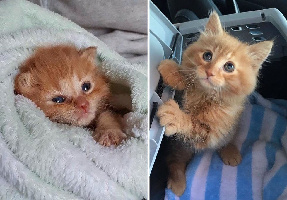 Kitten Insists on Staying with Family that Helped Him Thrive