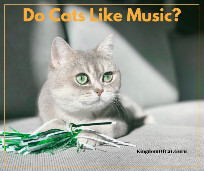Do Cats Like Human Music?